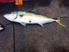 2015 Am Angler trip 4